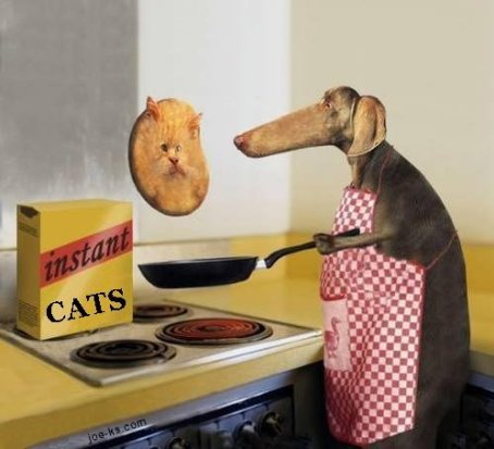 instantcats.jpg